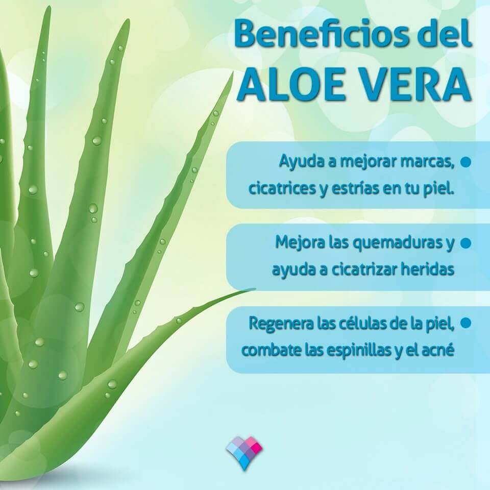 Aloe Vera Linfolab Wellness